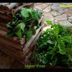 sol invictus Mater Vitae 02