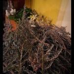 equinozio-di-primavera-2015-mater-vitae-29