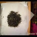 equinozio-di-primavera-2015-mater-vitae-37