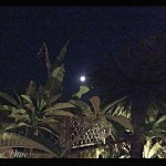 Full Moon Night 2015 Mater Vitae_05