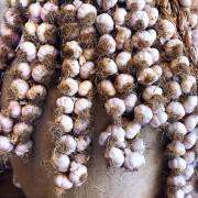aglio-mater-vitae